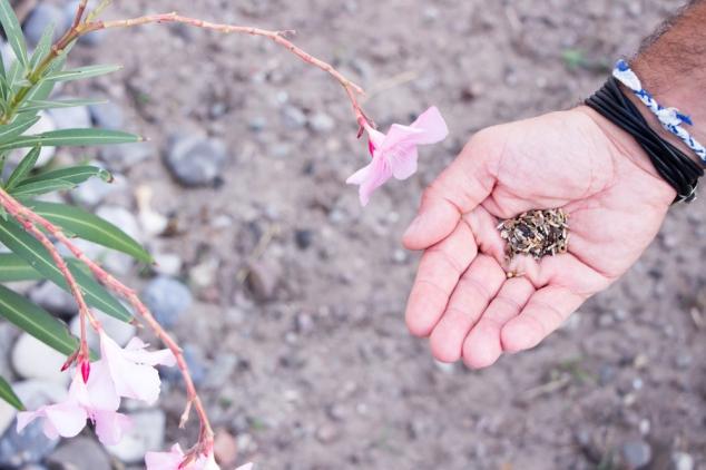 des-fleurs-pour-les-abeilles-truffaut-ofa-plantation-semis