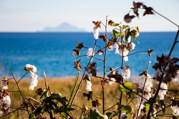 sint-maarteen-cupecoy-nature-saba-island-coton